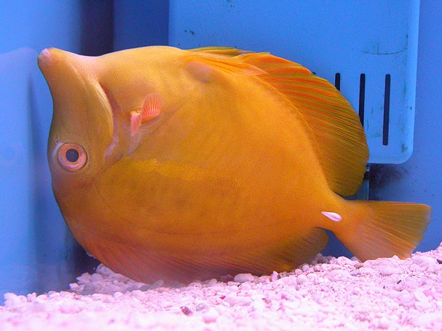 for Petco tropical fish