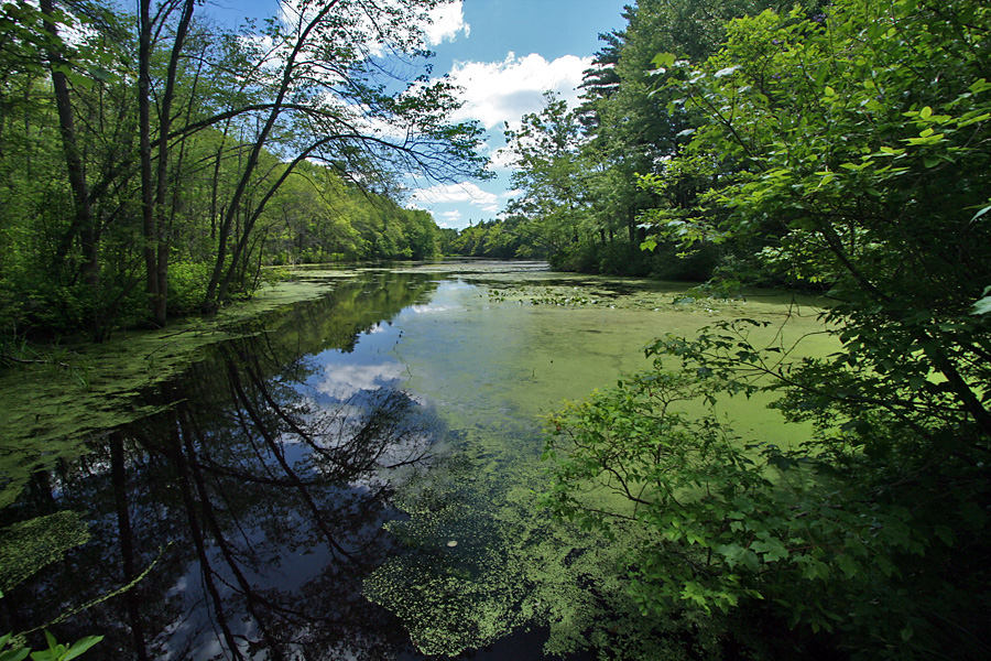 hamlen brook Hamlen brook by richard wilbur listen at the alder-darkened brink where the stream slows to a lucid jet i lean to the water, dinting its top with sweat, and see, before i can drink, a startled inchling trout of spotted near-transparency, trawling a shadow solider than he.